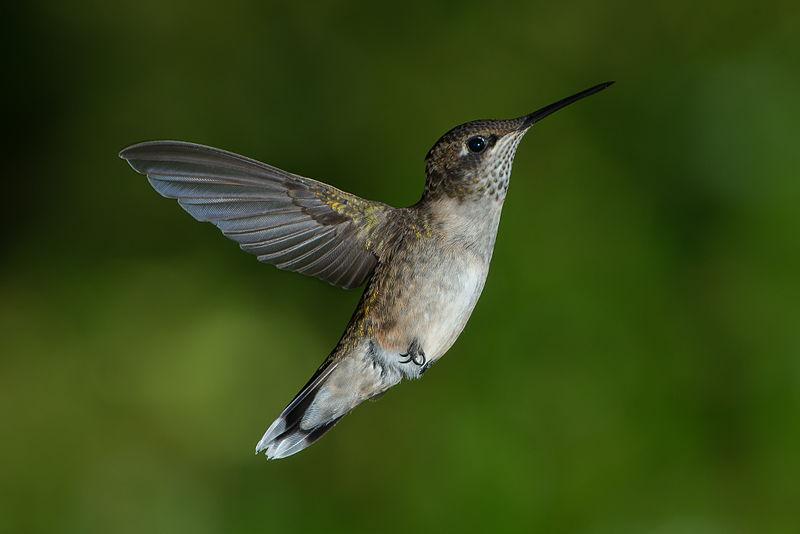 Google Hummingbird Content Writing